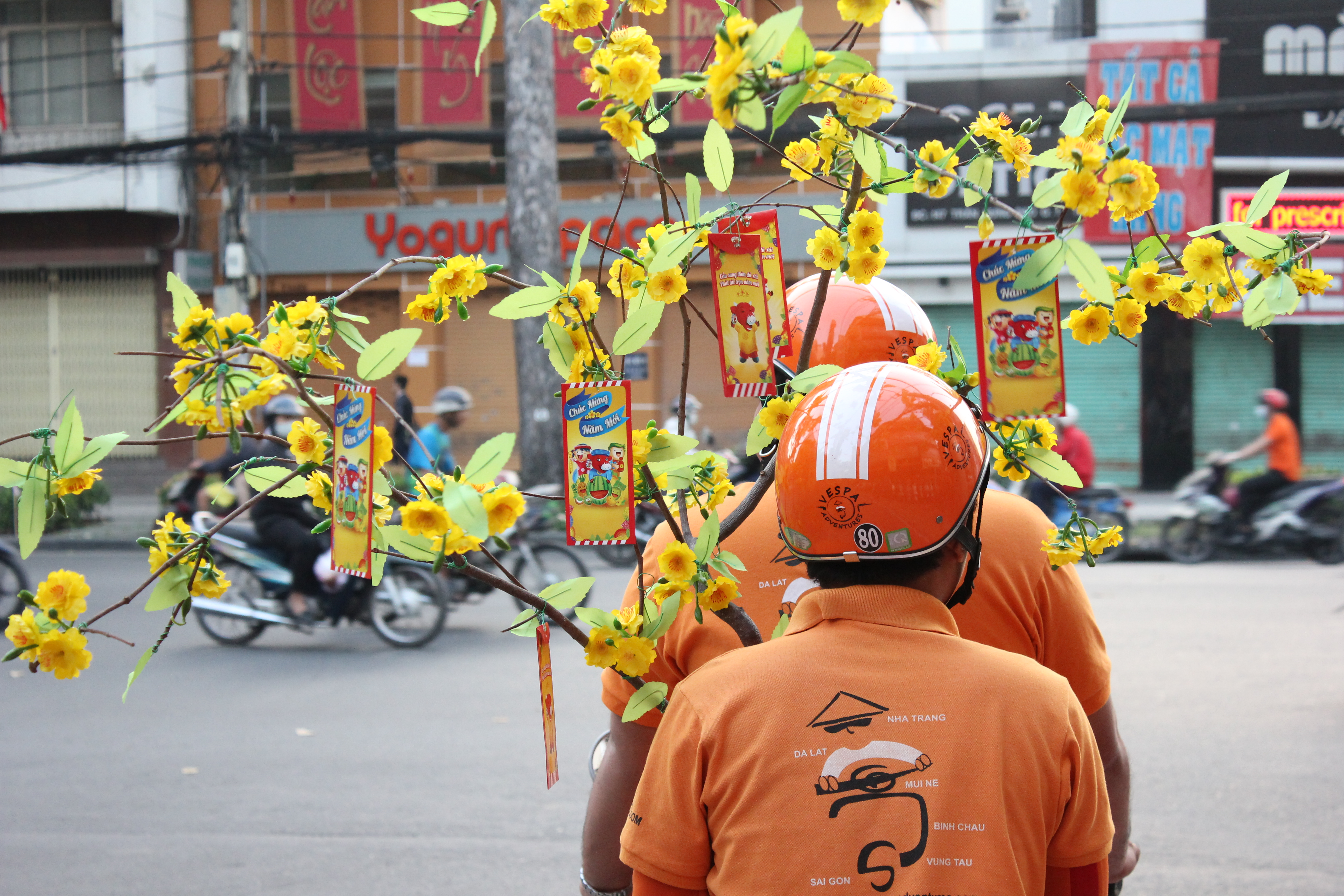 Lunar New Year Flower Vietnam