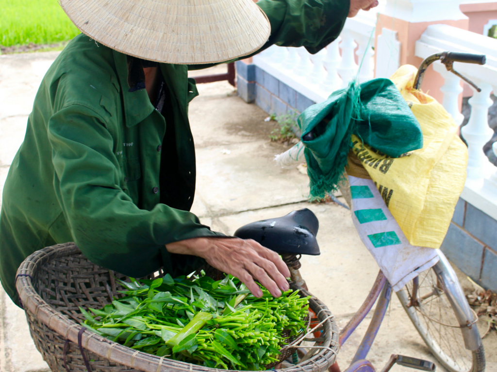 Woman taking the morning glory she picked to the market.