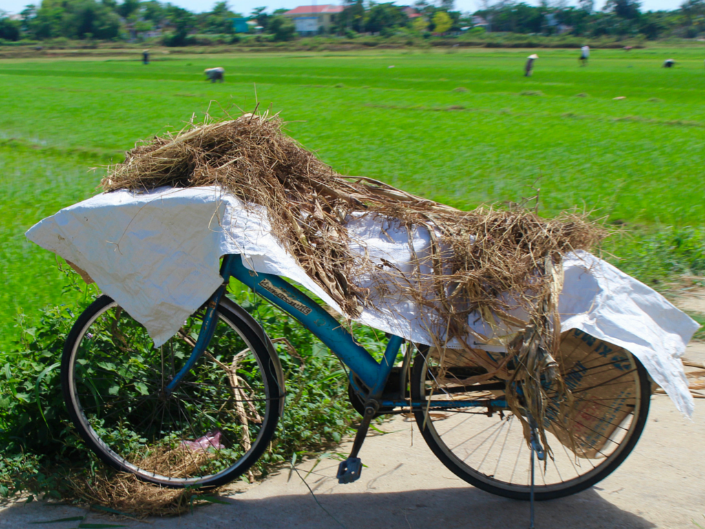 A rice farmer parked their bike for  the day as they work in the field.