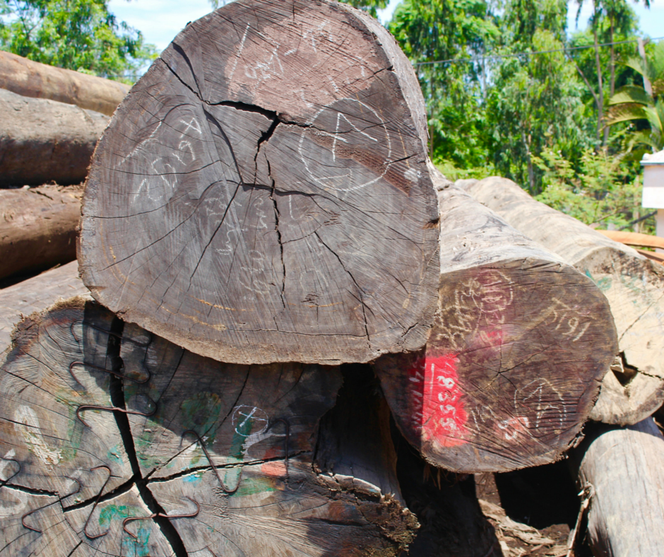 Teak wood used to build the Vietnamese fishing boats