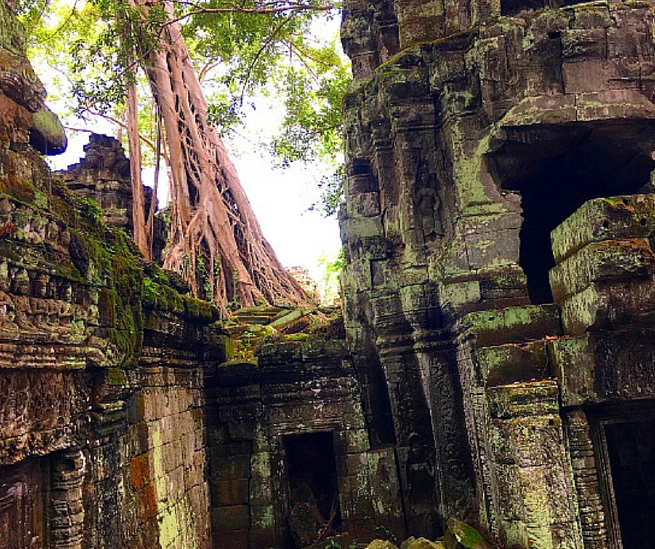 Trees Woven Through Temples