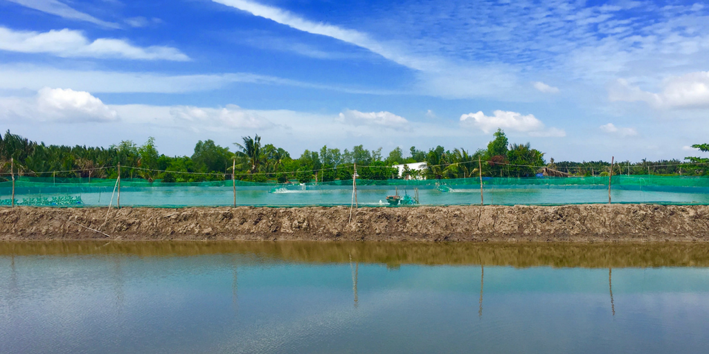 shrimp farm vietnam