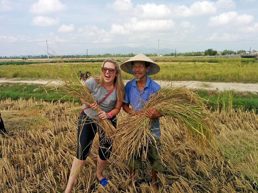 Rice Harvest Hoi An