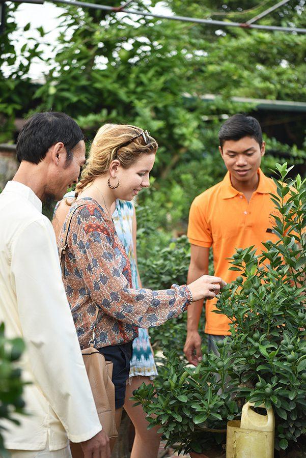 Kumquat tree Vietnam